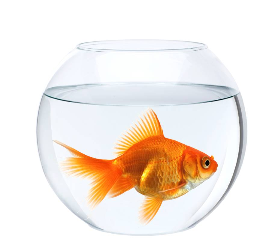 empty fish bowl with water in front of white background