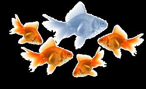Fish personality